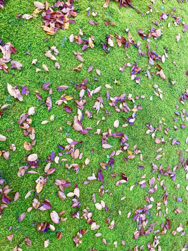 紅葉した葉っぱと芝生